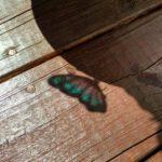 Houten vloer met vlinder